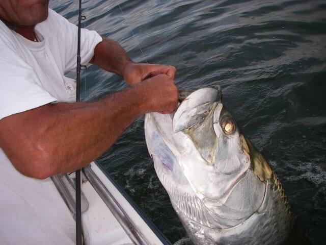 sportfishing charters tampa fl