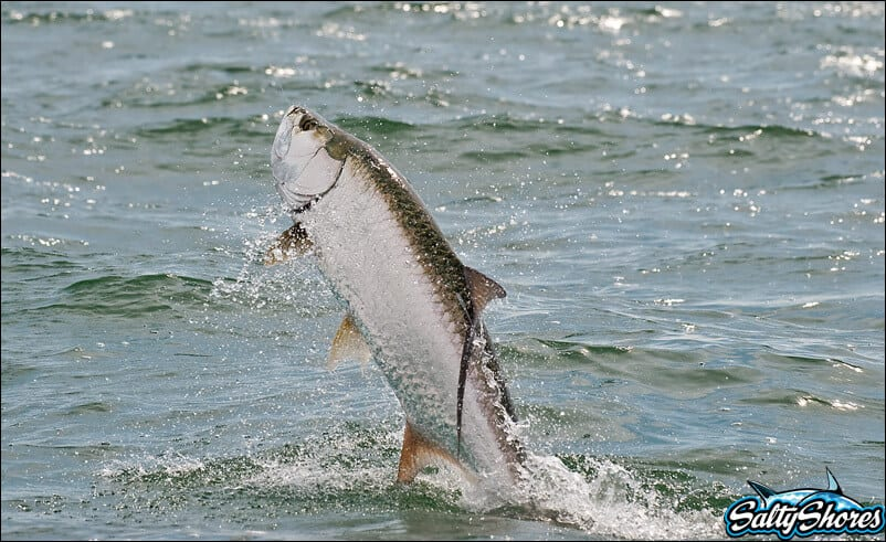 Tampa bay fishing reports for Put in bay fishing charter