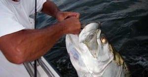 tampa bay tarpon fishing charters video