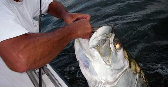 tampa bay tarpon fishing charters video