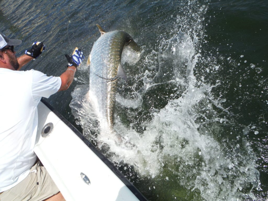 captain steve betz fishing for tarpon in tampa