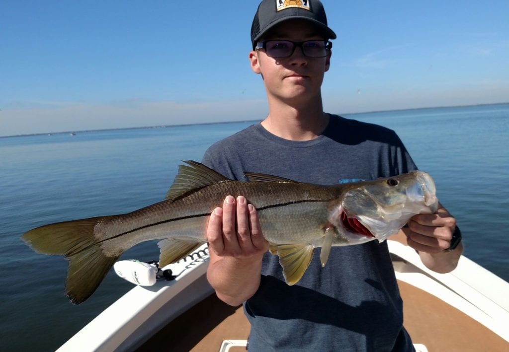 Jan 2017 snook tampa bay fishing charters for Tampa bay fishing guides