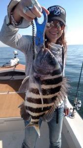sheepshead fishing in tampa bay
