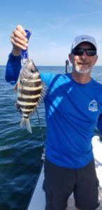sheepshead fishing tampa bay